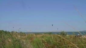 Vista del brazo de mar y de las cometas de la hierba verde sobre ella metrajes