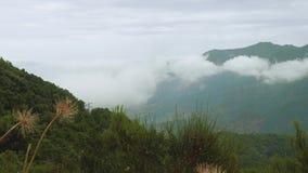 Vista del burrone coperta di nebbia sull'isola del Madera stock footage