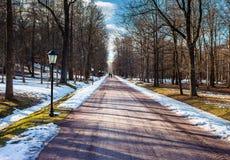 Vista del callejón de la primavera con los árboles y las lámparas fotos de archivo