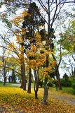 Vista del callejón del parque de la caída Foto de archivo libre de regalías
