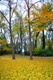 Vista del callejón del parque de la caída Fotografía de archivo libre de regalías