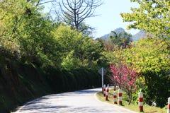 Vista del camino Foto de archivo