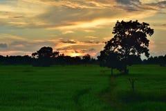 Vista del campo Imagen de archivo