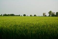 Vista del campo Foto de archivo libre de regalías