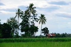 Vista del campo Fotos de archivo