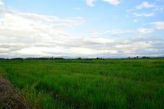 Vista del campo Fotos de archivo libres de regalías