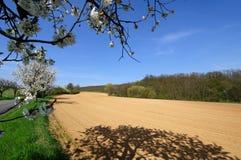 Vista del campo arado con los manzanos florecientes Foto de archivo libre de regalías