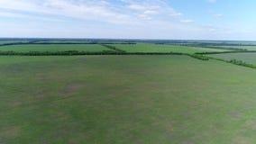 Vista del campo con las cosechas en junio en Rusia metrajes