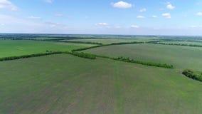 Vista del campo con las cosechas en junio en Rusia almacen de video