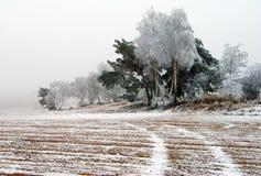 Vista del campo coperto di ghiaccio con la strada ed il legno rurali Fotografie Stock