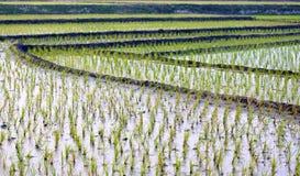 Vista del campo cultivado Imagen de archivo