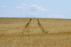 Vista del campo de cereal debajo de un cielo azul Imagen de archivo