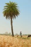 Vista del campo de trigo de oro Imagenes de archivo