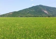 Vista del campo del arroz con la montaña en Phu Yen, Vietnam Imagen de archivo libre de regalías