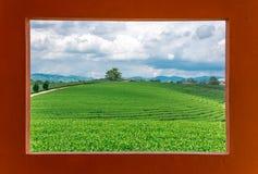 Vista del campo del tè verde dalla finestra con il fondo del cielo Fotografia Stock Libera da Diritti