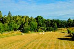 Vista del campo di agricoltura con le balle di fieno in film bianco di vuoto del polietilene fotografia stock