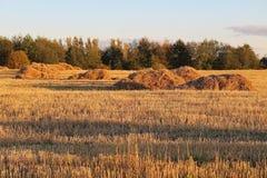 Vista del campo di autunno con i fieni Immagini Stock