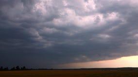 Vista del campo di erba di estate prima della tempesta video d archivio