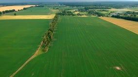 Vista del campo di erba di estate prima della tempesta stock footage