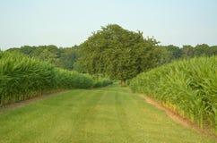Vista del campo di grano Fotografie Stock Libere da Diritti