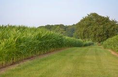 Vista del campo di grano Fotografia Stock