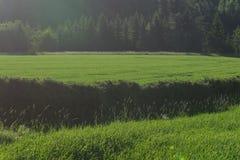Vista del campo di primo mattino Fotografia Stock