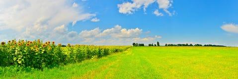 Vista del campo del girasol en campo del verano imagen de archivo