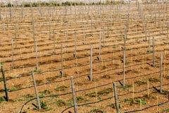 Vista del campo grande del billete para las uvas Fotografía de archivo libre de regalías