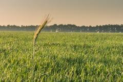 Vista del campo nei raggi dell'alba Immagini Stock