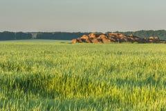 Vista del campo nei raggi dell'alba Fotografia Stock