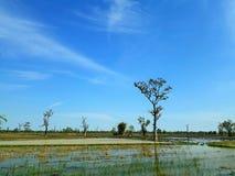 Vista del campo in Tailandia Immagini Stock Libere da Diritti