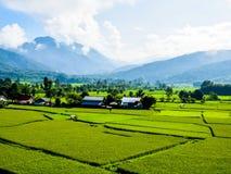 Vista del campo verde y de la choza fotografía de archivo libre de regalías
