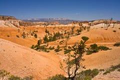Vista del canyon di Bryce immagini stock libere da diritti