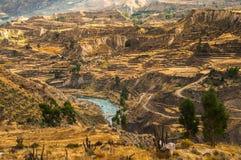 Vista del canyon di Colca Immagini Stock Libere da Diritti
