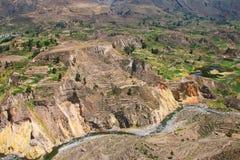 Vista del canyon di Colca nel Perù Fotografie Stock Libere da Diritti