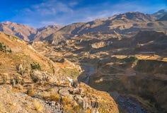 Vista del canyon profondo Colca Fotografie Stock Libere da Diritti