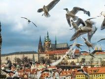 Vista del castello di Praga con il san Vitus Cathedral Fotografie Stock