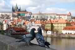 Vista del castello di Praga dal ponte di Charles Fotografia Stock