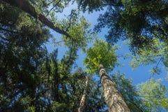 Vista del cielo attraverso gli alberi fotografie stock