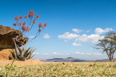 Vista del cielo azul sobre vista africano de la naturaleza Foto de archivo libre de regalías