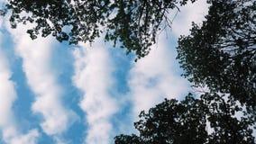 Vista del cielo dalla foresta