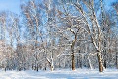 vista del claro del bosque en día de invierno soleado Fotos de archivo libres de regalías