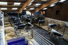 Vista del Cowhouse nell'azienda agricola del villaggio Fotografie Stock