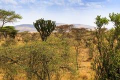 Vista del cratere di Ngorongoro Fotografie Stock