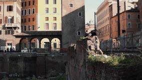 Vista del cuadrado de Largo di Torre Argentina en Roma, Italia Ubicación del empuje arqueológico El gato se sienta en la excavaci metrajes