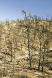 Vista del daño de fuego del fuego del día, 2006, a lo largo del camino del valle de Lockwood (cerca del MNT del pino y parque de  Fotografía de archivo