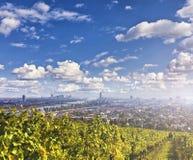 Vista del Danubio e l'orizzonte di Vienna con le vigne nella parte anteriore Fotografia Stock Libera da Diritti