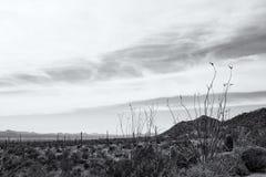 Vista del desierto de Arizona - de Sonaran y de las montañas más allá adentro Fotografía de archivo libre de regalías