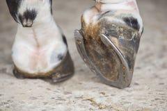 Vista del enganche del pie del caballo fuera de establos Imágenes de archivo libres de regalías