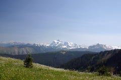 Vista del fiore della montagna Fotografia Stock